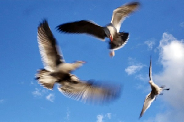 oiseaux dans le ciel de LA