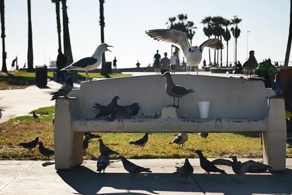 Venice Beach boardwalk Banc aux mouettes