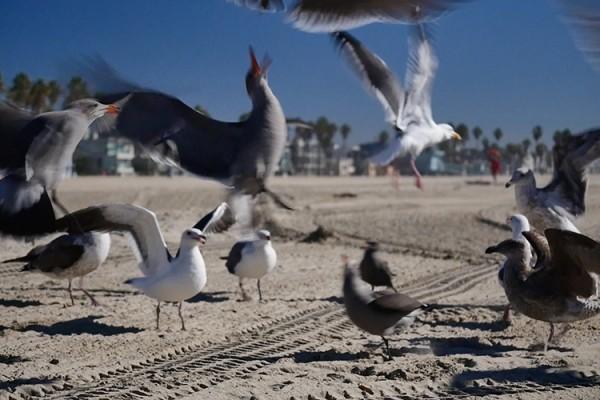 photo oiseaux 6 VB